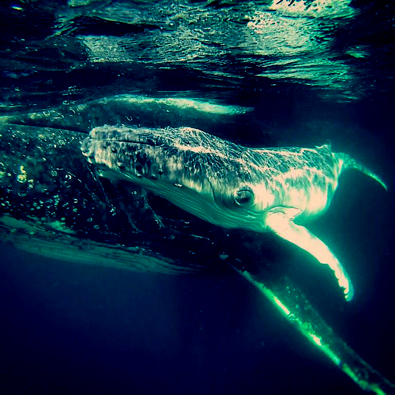mother and calf whales