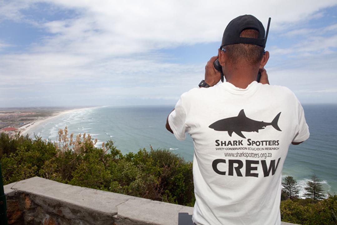 Shark Spotter