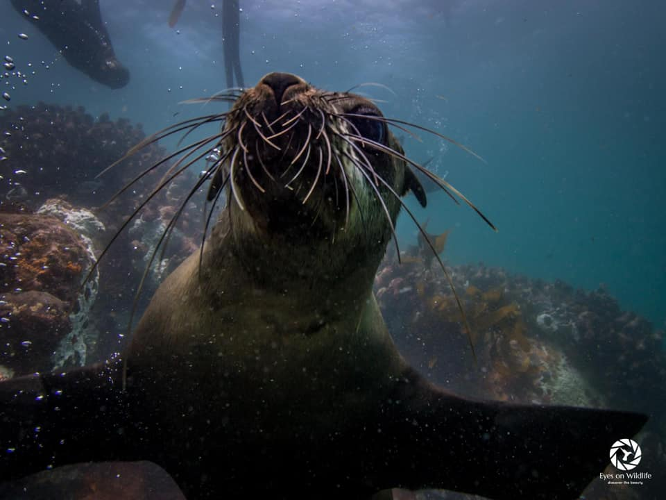 Guided seal snorkeling with marine biologist