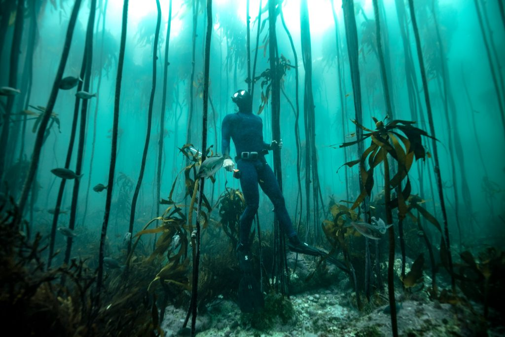 a marine biologist freediver in the kelp forest