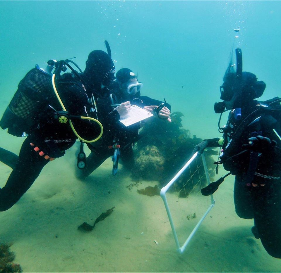 Scientific diving training