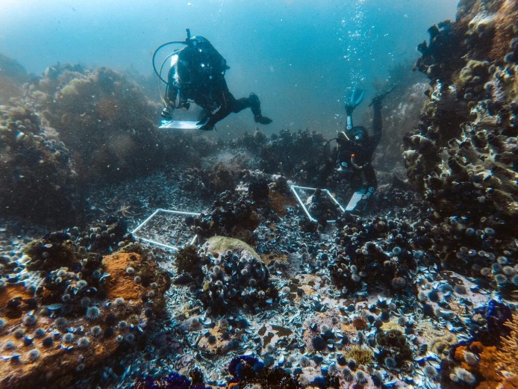 Divers running reef surveys and researching the fauna
