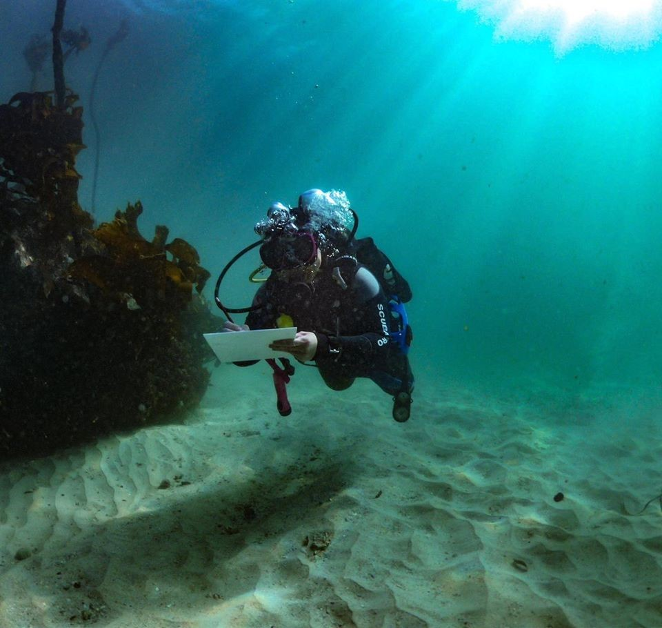 Diver collecting fish data
