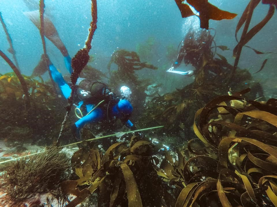 Scientists doing kelp research